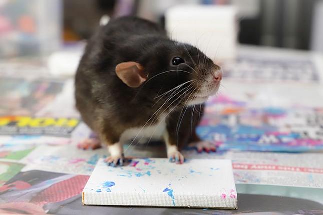 Trời ơi tin được không, tác giả của những bức tranh nghệ thuật này lại là một chú chuột ảnh 5