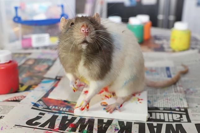 Trời ơi tin được không, tác giả của những bức tranh nghệ thuật này lại là một chú chuột ảnh 6