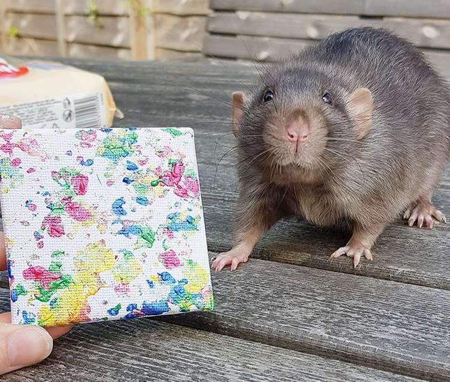 Trời ơi tin được không, tác giả của những bức tranh nghệ thuật này lại là một chú chuột ảnh 3