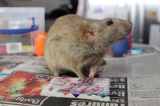Trời ơi tin được không, tác giả của những bức tranh nghệ thuật này lại là một chú chuột ảnh 7