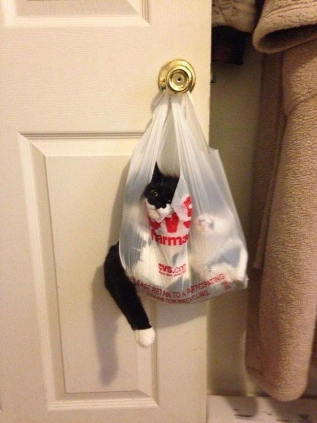 Những bức ảnh này chứng minh một điều: Các em mèo toàn thích làm điều kỳ quặc ảnh 8