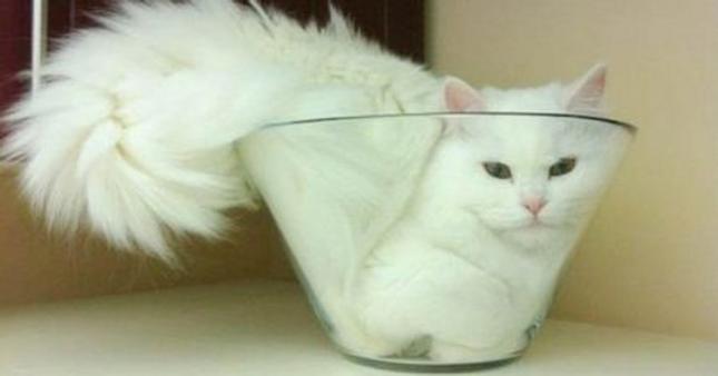 Những bức ảnh này chứng minh một điều: Các em mèo toàn thích làm điều kỳ quặc ảnh 1