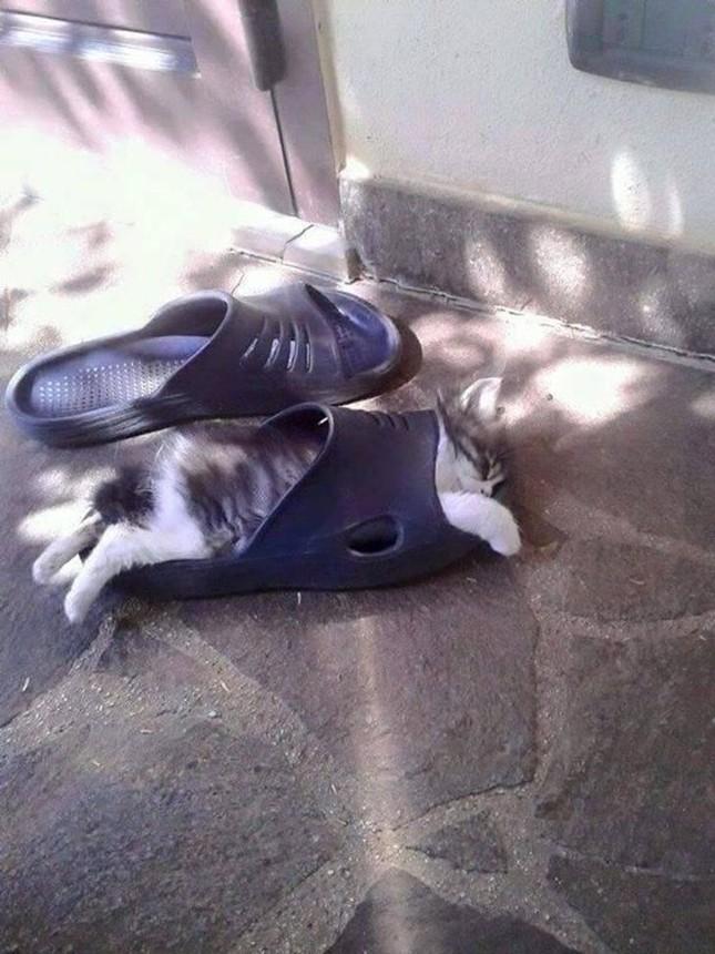 Những bức ảnh này chứng minh một điều: Các em mèo toàn thích làm điều kỳ quặc ảnh 7