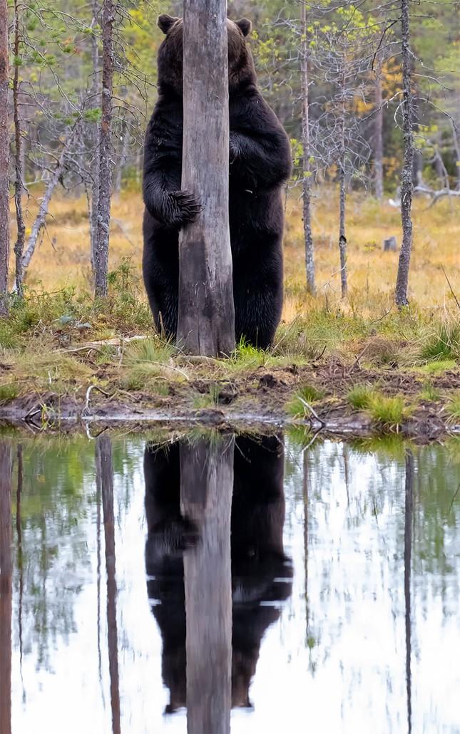"""Đề cử giải thưởng Ảnh động vật hoang dã ngộ nghĩnh đáng yêu sẽ khiến bạn """"ôm tim""""! ảnh 2"""