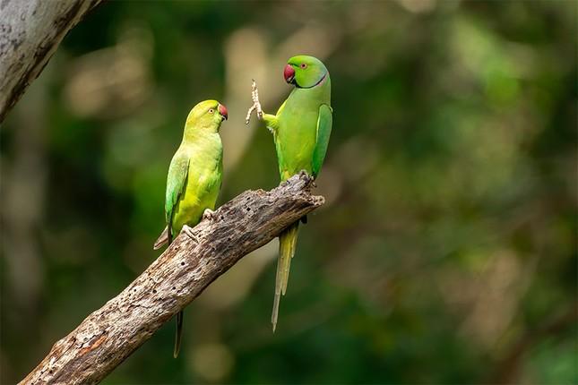"""Đề cử giải thưởng Ảnh động vật hoang dã ngộ nghĩnh đáng yêu sẽ khiến bạn """"ôm tim""""! ảnh 4"""