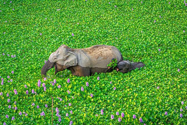 """Đề cử giải thưởng Ảnh động vật hoang dã ngộ nghĩnh đáng yêu sẽ khiến bạn """"ôm tim""""! ảnh 1"""