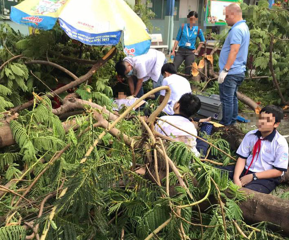 Toàn cảnh vụ cây phượng bật gốc đè vào người học sinh gây thương vong tại trường Bạch Đằng ảnh 2
