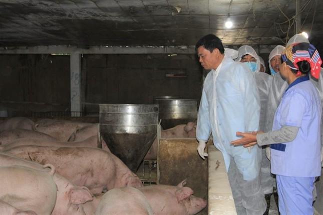 Bộ trưởng NN&PTNT: Găm hàng, thổi giá lợn coi chừng 'gậy ông đập lưng ông' ảnh 1