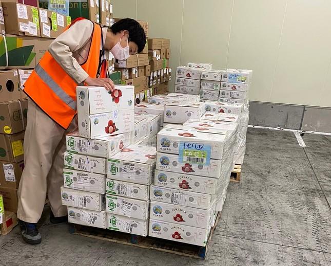 Việt Nam xuất khẩu lô vải thiều đầu tiên sang Nhật Bản ảnh 1