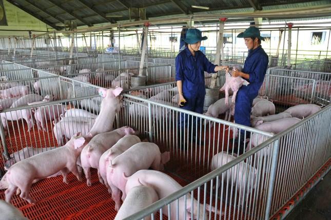 Bộ trưởng Nông nghiệp: 'Soi kính hiển vi' cũng không thấy sản phẩm chăn nuôi xuất khẩu ảnh 3