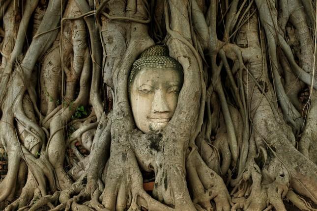 Thiếu nữ bên vườn đào lọt top ảnh ấn tượng nhất của Reuters ảnh 19