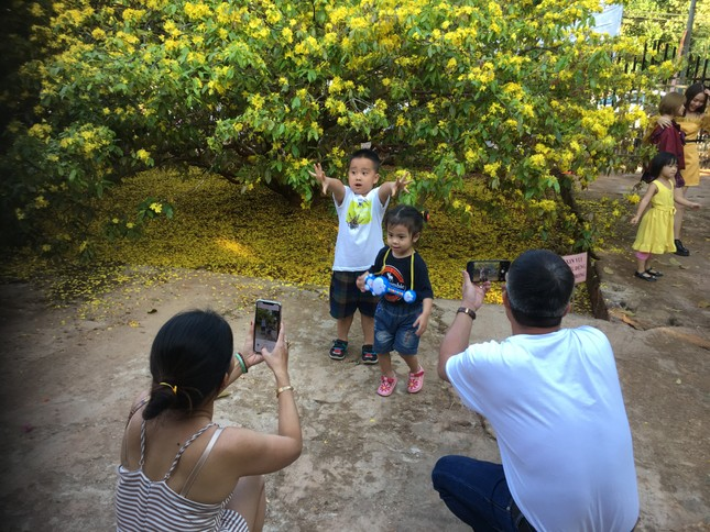 'Cụ' mai vàng đón hàng ngàn khách tham quan 3 ngày Tết ảnh 2