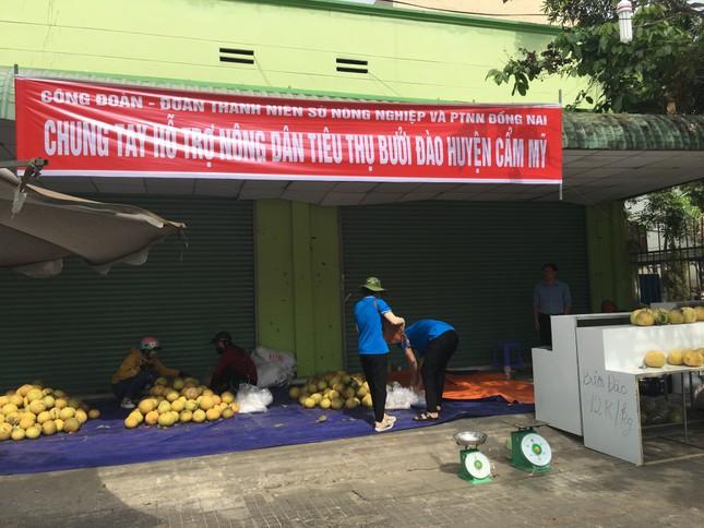 Hàng trăm tấn bưởi chờ 'giải cứu' ở Đồng Nai ảnh 4