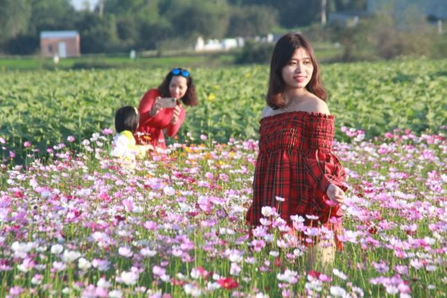 Vườn hoa hướng dương 'khổng lồ' ở Quảng Ngãi hút khách ngày cận Tết ảnh 17
