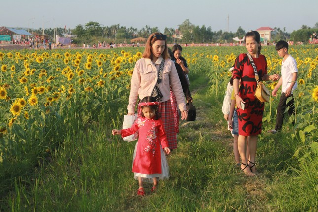 Vườn hoa hướng dương 'khổng lồ' ở Quảng Ngãi hút khách ngày cận Tết ảnh 1