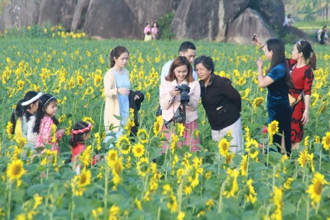 Vườn hoa hướng dương 'khổng lồ' ở Quảng Ngãi hút khách ngày cận Tết ảnh 7