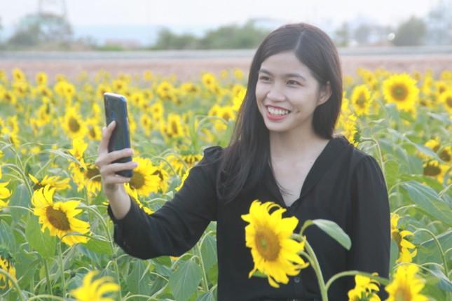 Vườn hoa hướng dương 'khổng lồ' ở Quảng Ngãi hút khách ngày cận Tết ảnh 9