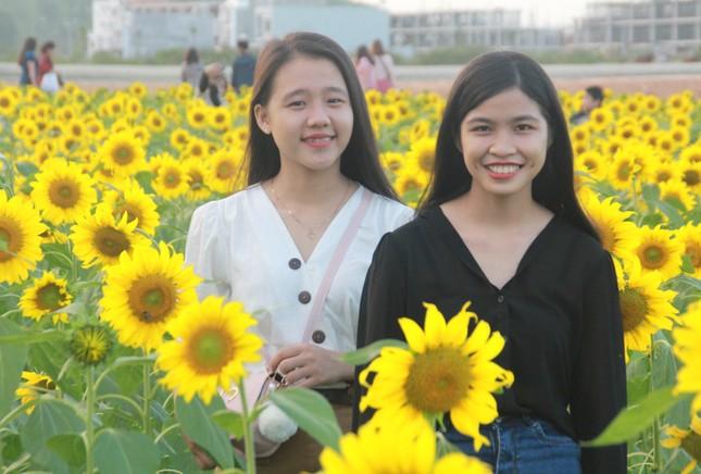 Vườn hoa hướng dương 'khổng lồ' ở Quảng Ngãi hút khách ngày cận Tết ảnh 10
