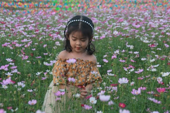 Vườn hoa hướng dương 'khổng lồ' ở Quảng Ngãi hút khách ngày cận Tết ảnh 19