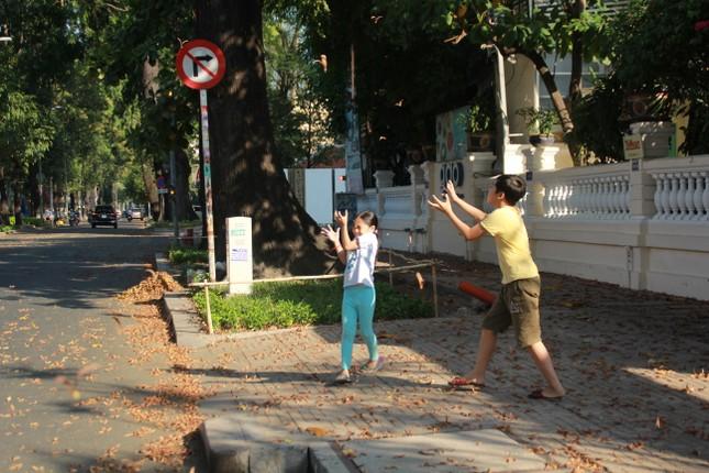 Ngày chớm hè, ngắm cánh chò nâu lả tả bay giữa Sài Gòn ảnh 4