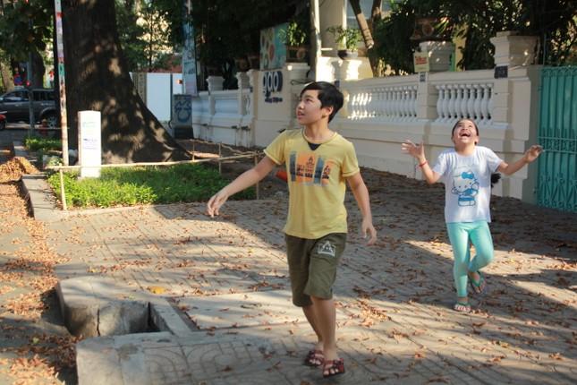 Ngày chớm hè, ngắm cánh chò nâu lả tả bay giữa Sài Gòn ảnh 3