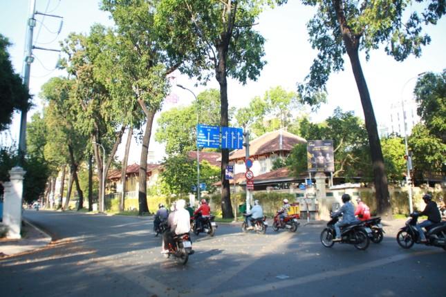 Ngày chớm hè, ngắm cánh chò nâu lả tả bay giữa Sài Gòn ảnh 2