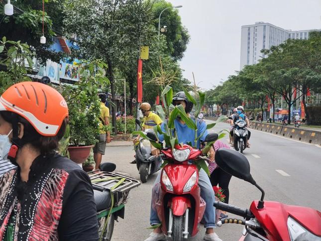 TPHCM: Chợ hoa Hồ Thị Kỷ 'xả hàng' kéo khách ảnh 15