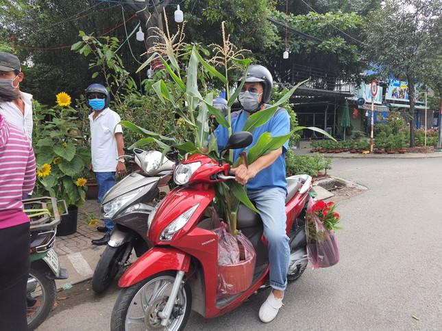 TPHCM: Chợ hoa Hồ Thị Kỷ 'xả hàng' kéo khách ảnh 16