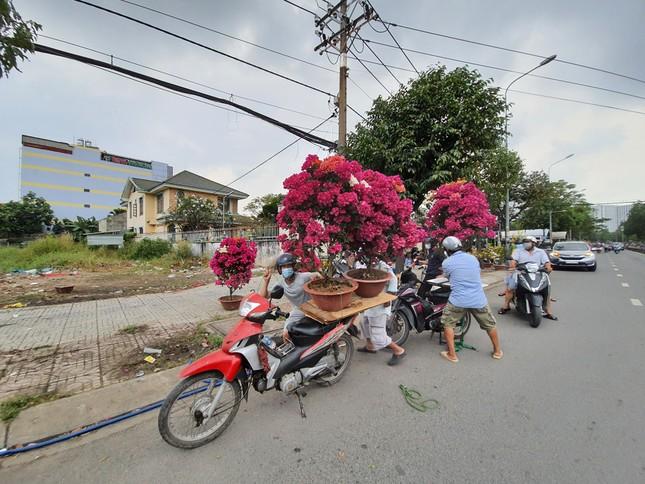 TPHCM: Chợ hoa Hồ Thị Kỷ 'xả hàng' kéo khách ảnh 25