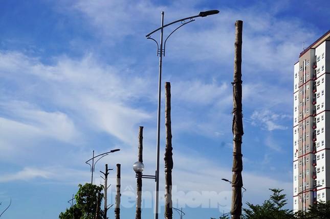 Hàng loạt cây xanh chết khô trên đường 'nghìn tỷ' ở Hà Nội ảnh 5