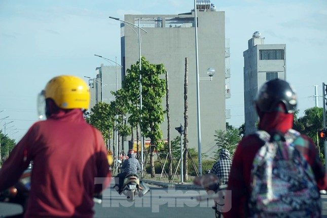 Hàng loạt cây xanh chết khô trên đường 'nghìn tỷ' ở Hà Nội ảnh 9