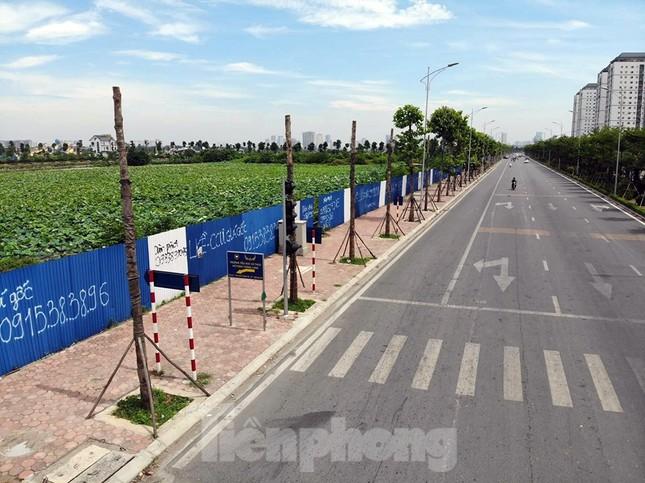 Hàng loạt cây xanh chết khô trên đường 'nghìn tỷ' ở Hà Nội ảnh 2