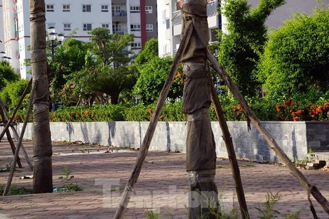 Hàng loạt cây xanh chết khô trên đường 'nghìn tỷ' ở Hà Nội ảnh 11