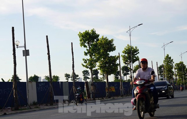 Hàng loạt cây xanh chết khô trên đường 'nghìn tỷ' ở Hà Nội ảnh 8