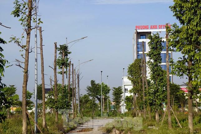 Hàng loạt cây xanh chết khô trên đường 'nghìn tỷ' ở Hà Nội ảnh 13