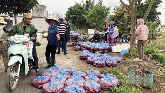 Nữ giáo viên cùng bạn giải cứu hàng chục tấn nông sản huyện Tiên Lãng ảnh 5