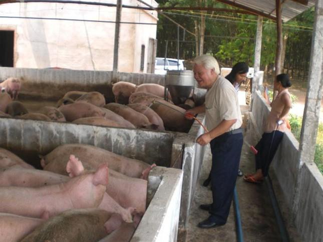 Ngăn chặn dịch lợn tai xanh, cách nào? ảnh 1