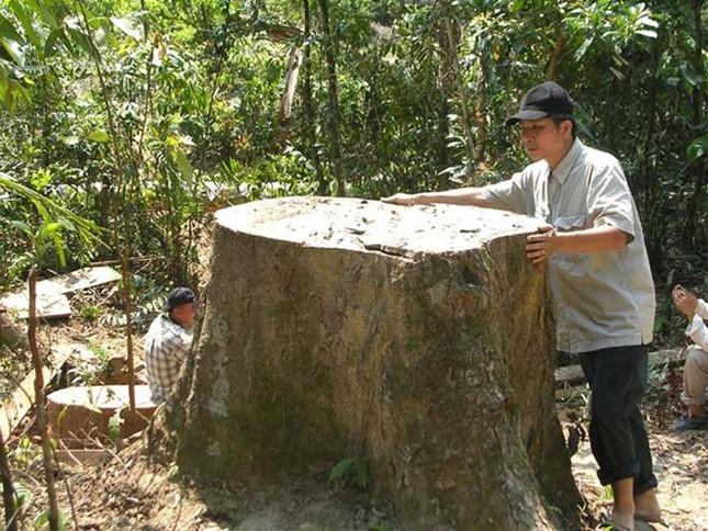 Quảng Nam: Lộ diện các thế lực tiếp tay phá rừng đầu nguồn ảnh 1