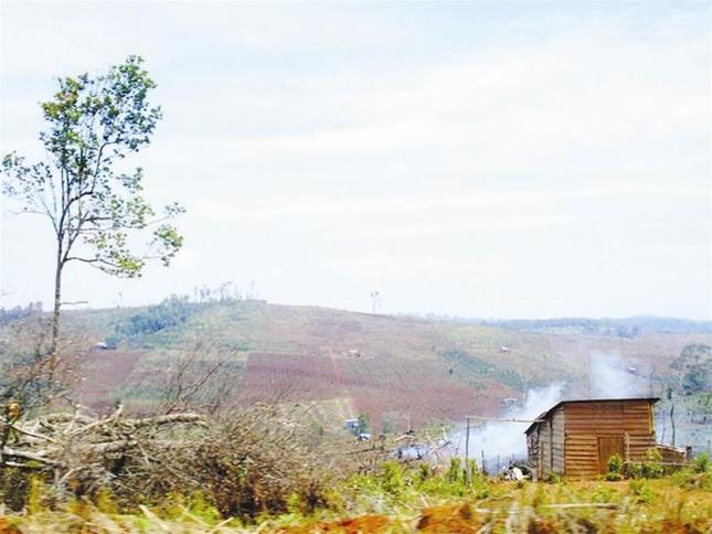 Tây Nguyên: Cơn bão phá rừng từ di cư tự do ảnh 1