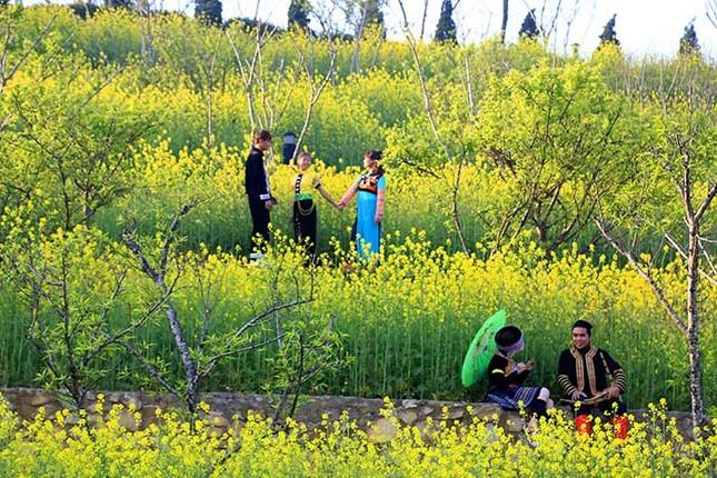 Mải mê 'sống ảo' với thảm hoa cải vàng đẹp mê hồn ở Sun World Fansipan ảnh 2