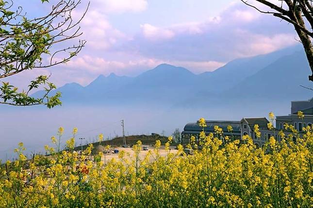 Mải mê 'sống ảo' với thảm hoa cải vàng đẹp mê hồn ở Sun World Fansipan ảnh 7