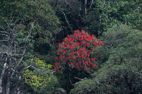 Mải mê 'sống ảo' với thảm hoa cải vàng đẹp mê hồn ở Sun World Fansipan ảnh 9