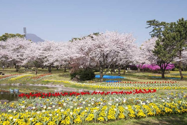 Kinh nghiệm du lịch Kyushu hữu ích cho mọi người ảnh 1