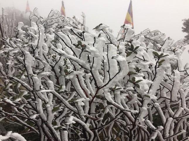 Nhiệt độ giảm sâu, băng tuyết phủ trắng Fansipan như trời Âu ảnh 3