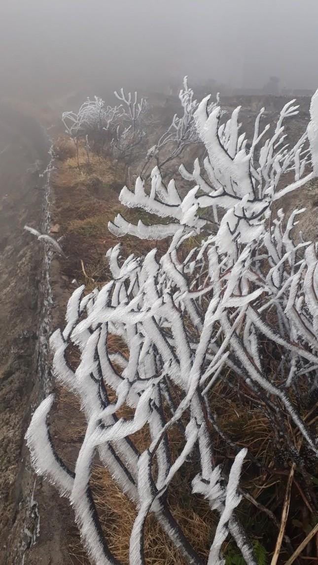 Nhiệt độ giảm sâu, băng tuyết phủ trắng Fansipan như trời Âu ảnh 5