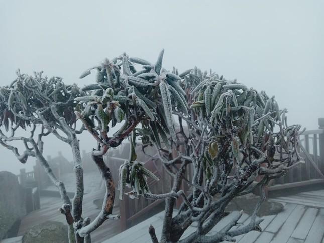 Nhiệt độ giảm sâu, băng tuyết phủ trắng Fansipan như trời Âu ảnh 6