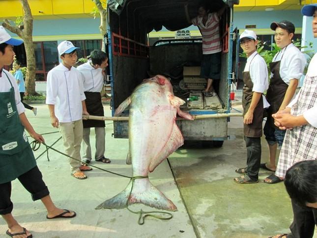 Săn cá khủng giá hàng chục triệu đồng ở miền Tây ảnh 1