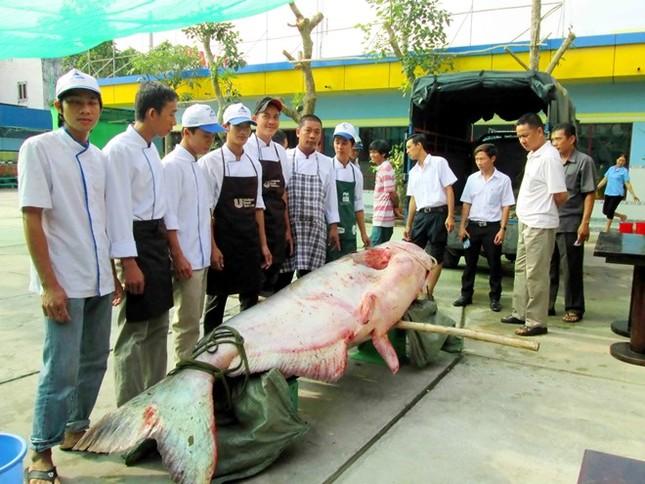 Săn cá khủng giá hàng chục triệu đồng ở miền Tây ảnh 2