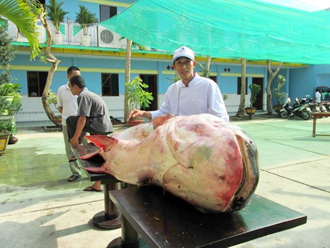 Săn cá khủng giá hàng chục triệu đồng ở miền Tây ảnh 4