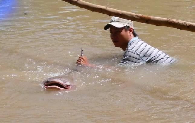 Săn cá khủng giá hàng chục triệu đồng ở miền Tây ảnh 5